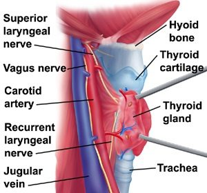Thyroid Gland Anatomy Pain Neck